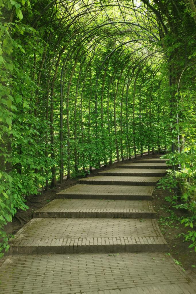 Walking the path