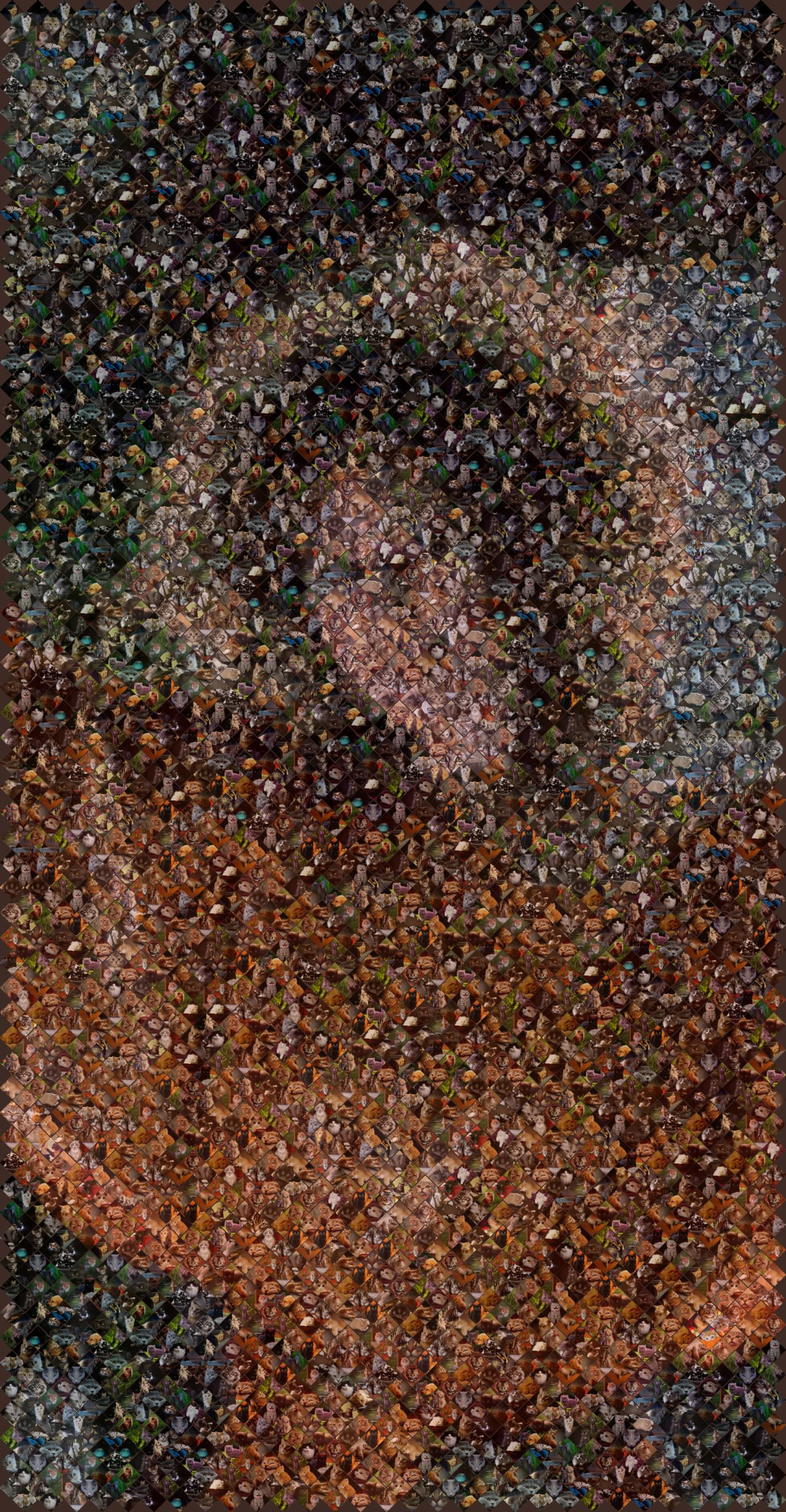 mosaic of dana in kittens